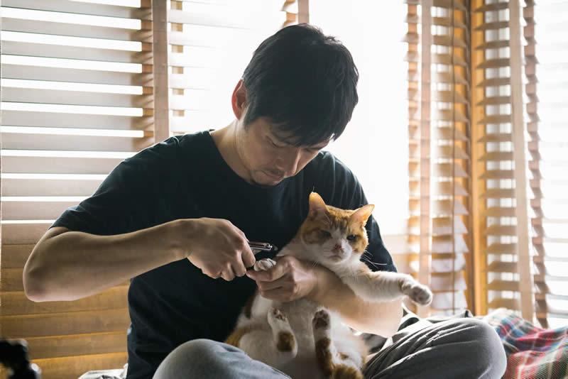 ブランケット・キャッツ【第1回】感想!西島秀俊の上級猫つかい感に癒される!